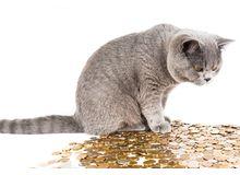 Средний размер потребкредитов в марте установил новый рекорд - 282,7 тыс. рублей